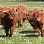 Visit the Royal Highland Show